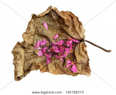 dried up a huge crumpled brown with golden and green-veined leaves of poplar with flowers geranium