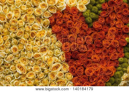 Colorful Rose Background