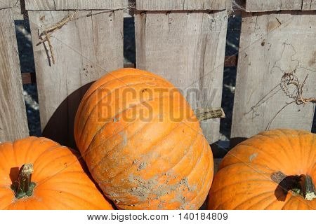 three smaller pumpkins piled in a wooden crate