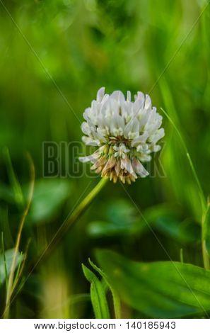 Floral background blurred