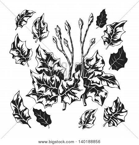 Stylized black and white foliage vector set isolated on white background