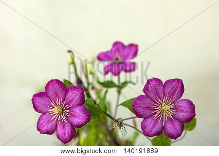 Red flowers on blurred white background art