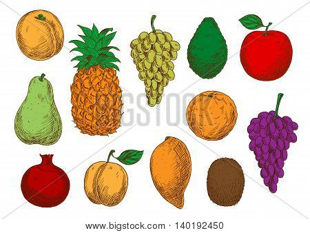 Green and violet grapes, red apple and pomegranate, orange, mango, peach and apricot, green pear and kiwi, pineapple and avocado fruits. Fresh fruits sketches for organic farming design