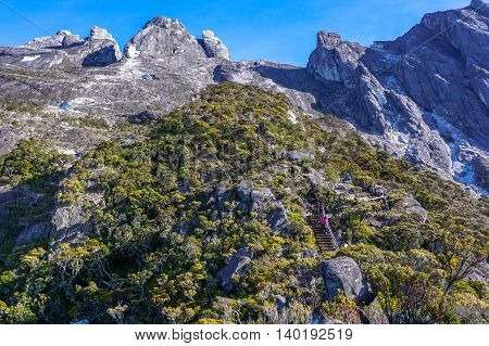 Peaks of Mountain Kinabalu seen through twisted alpine trees growing at high altitude.The new Mount Kinabalu Summit Trail,Ranau trail was officially opened to climbers from all over the world on 1st Dec 2015.