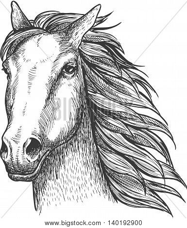 Racehorse stallion sketch of purebred horse head with flying mane on the wind. Equestrian sport theme or horse racing design