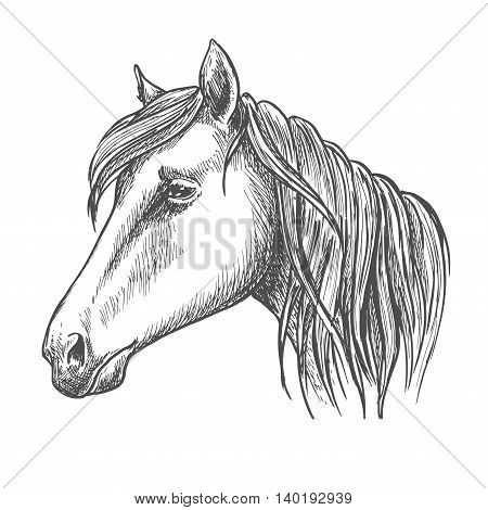 Riding horse head sketch with long mane. Horse racing, equestrian sport theme or t-shirt print design