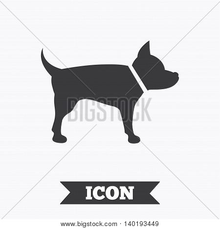 Dog sign icon. Pets symbol. Graphic design element. Flat pets symbol on white background. Vector
