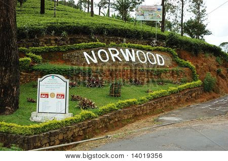 Norwood tea plantations in Nuwara Elliya,Sri Lanka