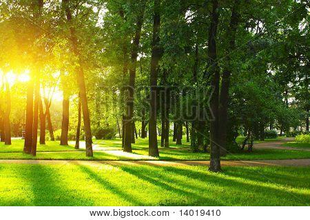 Atardecer en el parque con árboles y hierba verde