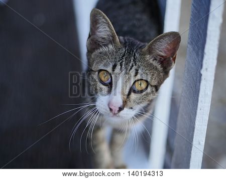 Young and beautiful tabby cat staring at you
