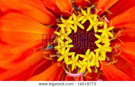 Macro shot of flower. Focus on stamens