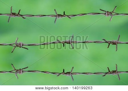 closeup Rusty barbed wire on green background