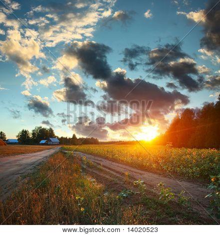 Pôr do sol sobre o campo de girassóis