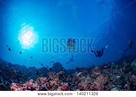 Jellyfish In Maldives Corals And Fish Underwater Panorama