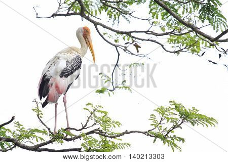 Birds At Zoo Negara Malaysia
