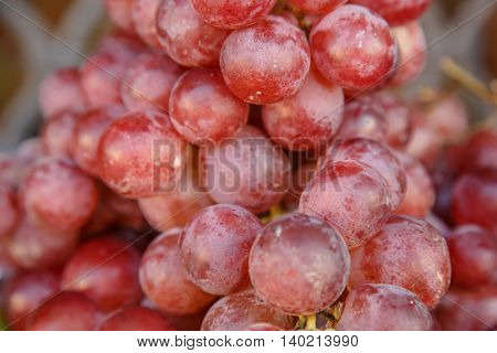 red grapes in detail from a market