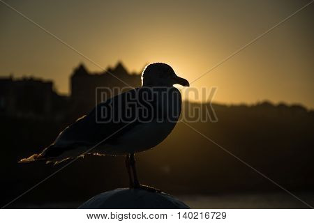 Whitby seagull seascape in Yorkshire England UK