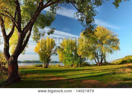 Grupo de otoñales grandes árboles en un césped