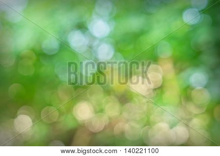Bokeh background of foliage. Nature composition, blur