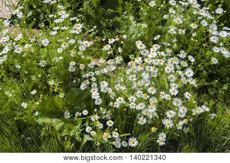 A charming glade of summer garden flowers and greenery.