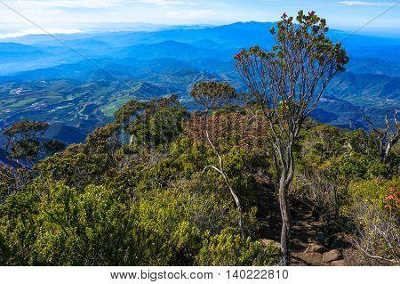 Town Ranau & Kundasang,Sabah seen through twisted alpine trees growing at high altitude from Mountain Kinabalu,Sabah Land Below The Wind