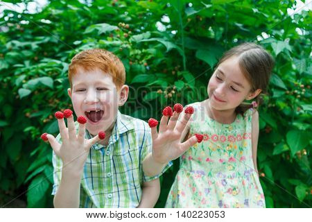 Happy children eating raspberry from fingers in summer garden. Redhead funny boy and girl, sister and brother having fun outdoors in raspberry cane. Healthy food for kids