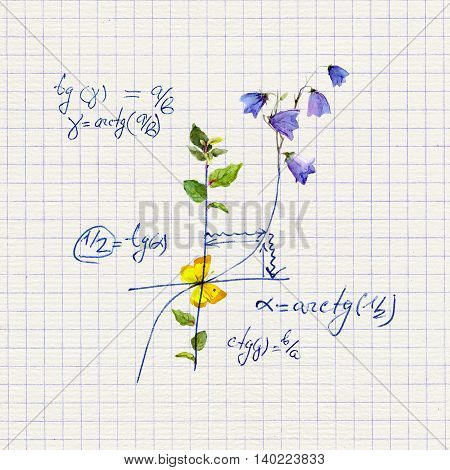 Math design - mathematical graph and formula with flowers. Hand written concept of science