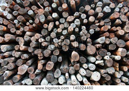 Firewood for burn charcoal