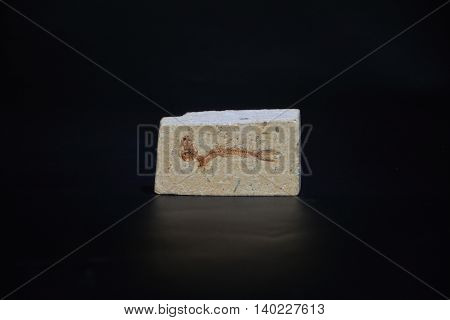 one stone fossil on a black background