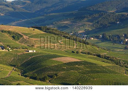 Morning lights and colors over vineyards of Beaujolais France