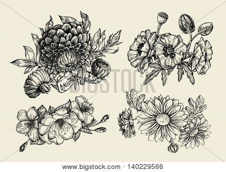 Flowers. Hand-drawn sketch flower, poppy, chrysanthemum dahlia Vector illustration