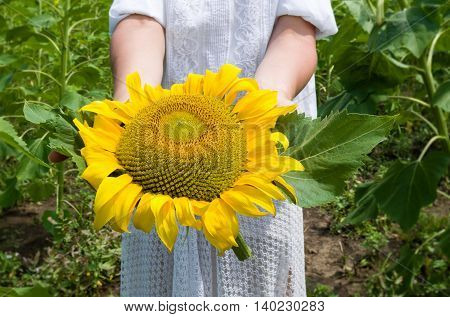 girl is holding sunflower in a meadow closeup