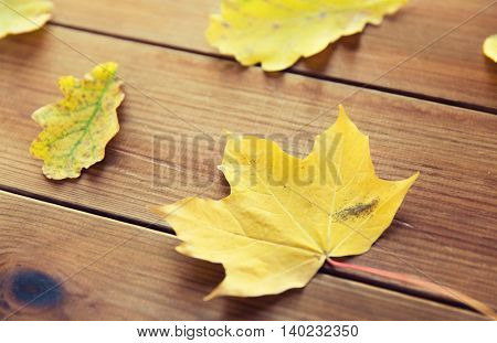 nature, season, autumn and botany concept - close up of many different fallen autumn leaves on wooden board