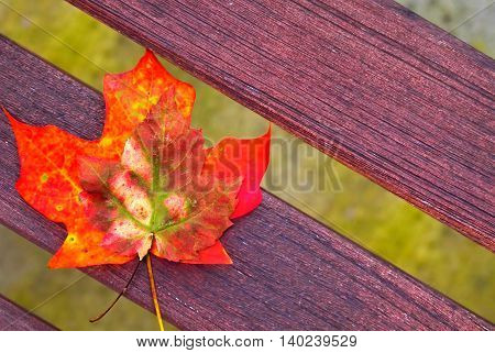 Autumn background with maple leaves on bench