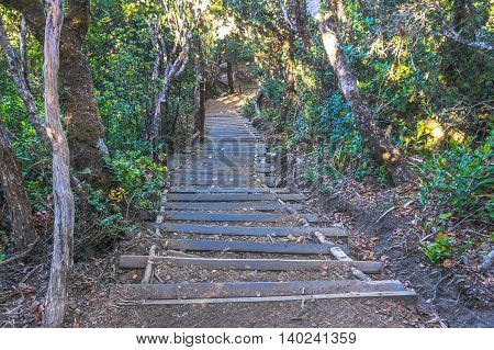 Ranau,Sabah,Borneo-March 13,2016:Wooden stairs up to summit of mountain Kinabalu.The new Mount Kinabalu Summit Trail was officially opened to climbers from all over the world on 1st December 2015.