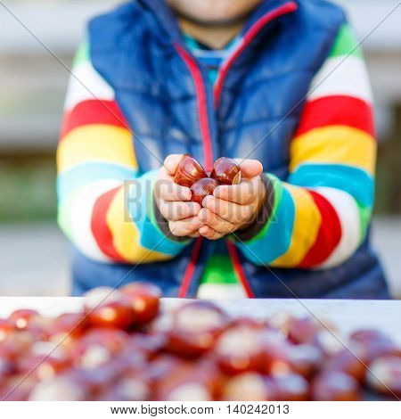 Hands of little kid playing with chestnuts in autumn park. Child having fun on cold fall sunny day. Happy childhood and outdoor leisure concept.