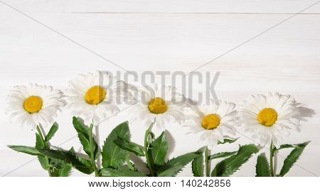 chamomile flowers bouquet on white wood table