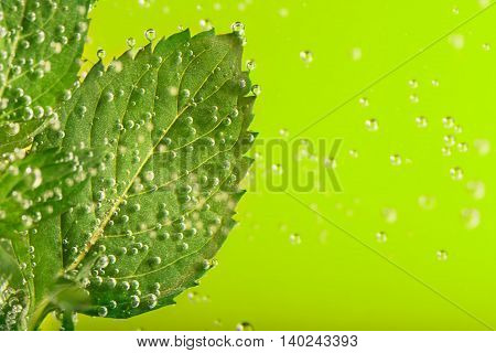 Fresh mint surrounded by water bubbles with copy space on the green background