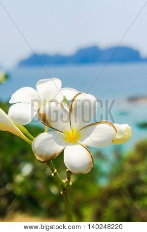 Flora and Sea Hill Garden
