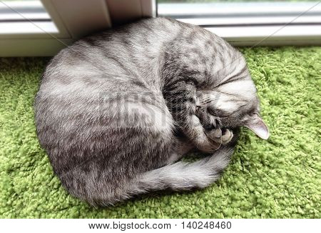 Funny sleeping cat near the window, view from the top