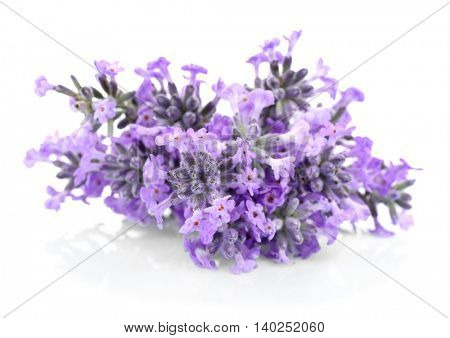 Bouquet of lavender flowers on light background