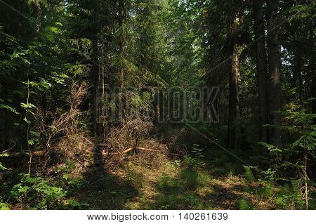 Landscape view. Summer deep in taiga forest