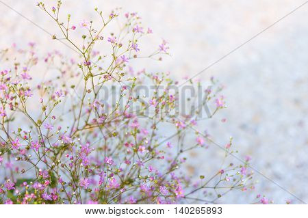delicate lace bush of small bright pink flowers on a light motley background