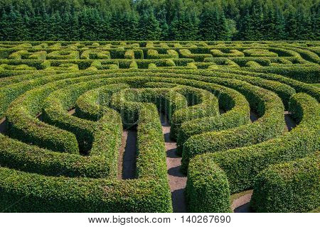 Green bushes circular labyrinth hedge maze. Top view.