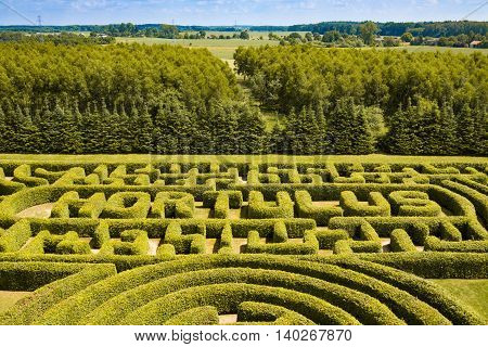 Green bushes labyrinth hedge maze. Top view.