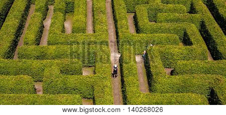 People walking on green bushes labyrinth hedge maze.