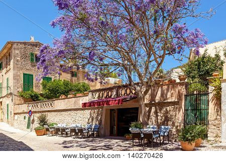 Little Street Cafe in old part of town with an amazing tree Jacaranda by entry