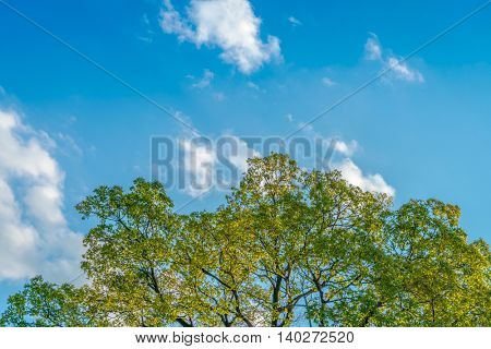 Summer landscape with sky and tree