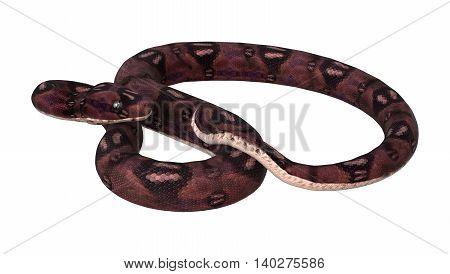 3D Rendering  Anaconda Snake On White