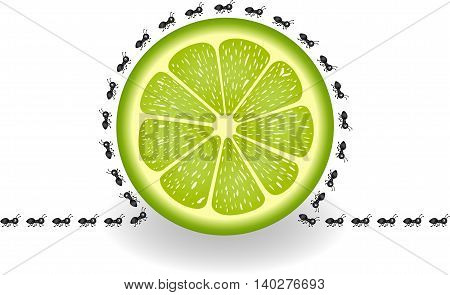Scalable vectorial image representing a ants around lime slice, isolated on white.